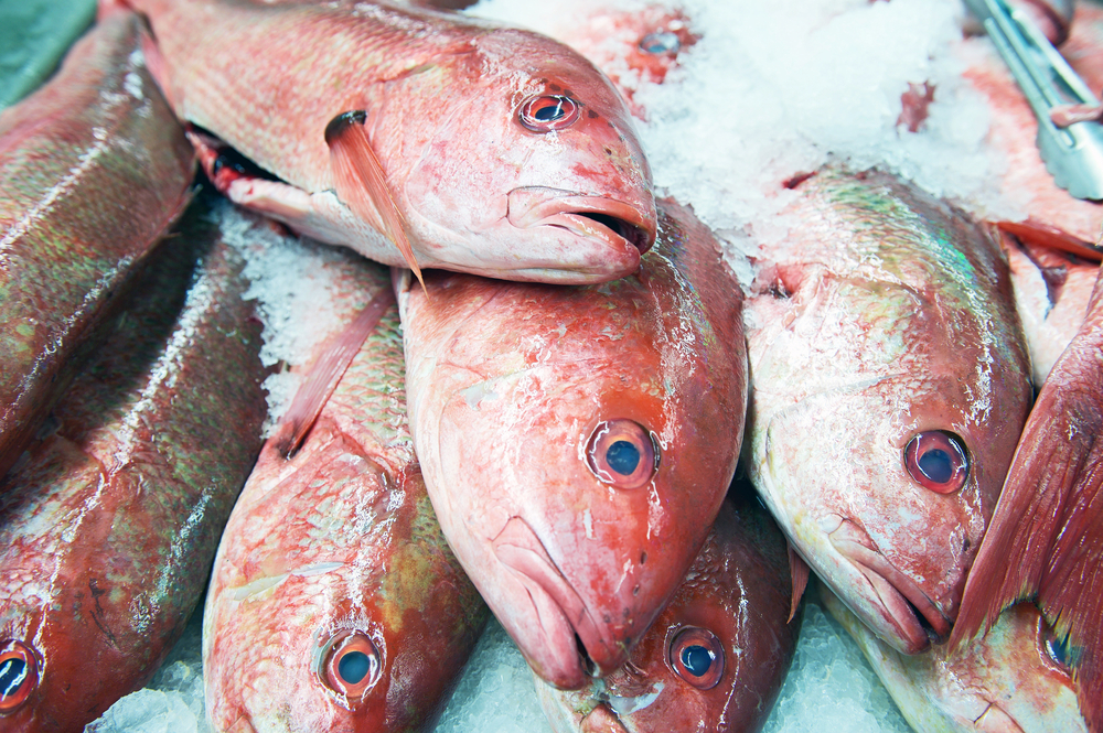 The mystery behind toxic seafood fgcu 360 for Diarrhea after eating fish
