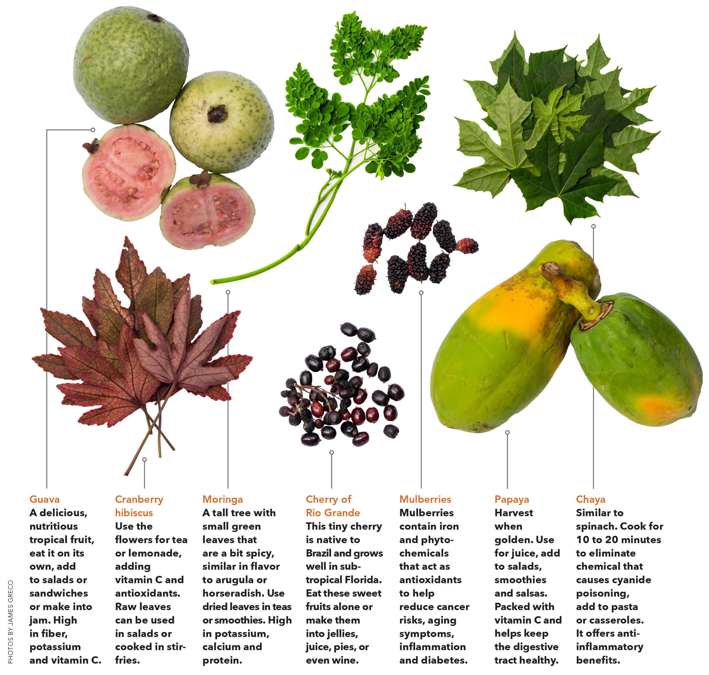 food forest image