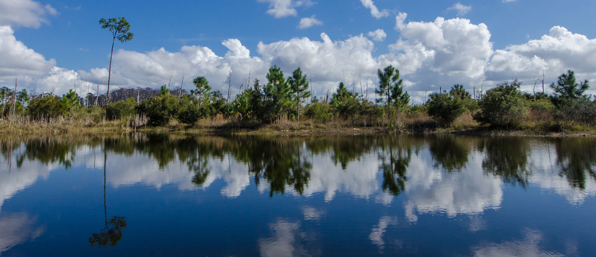 This is a photo of wetlands