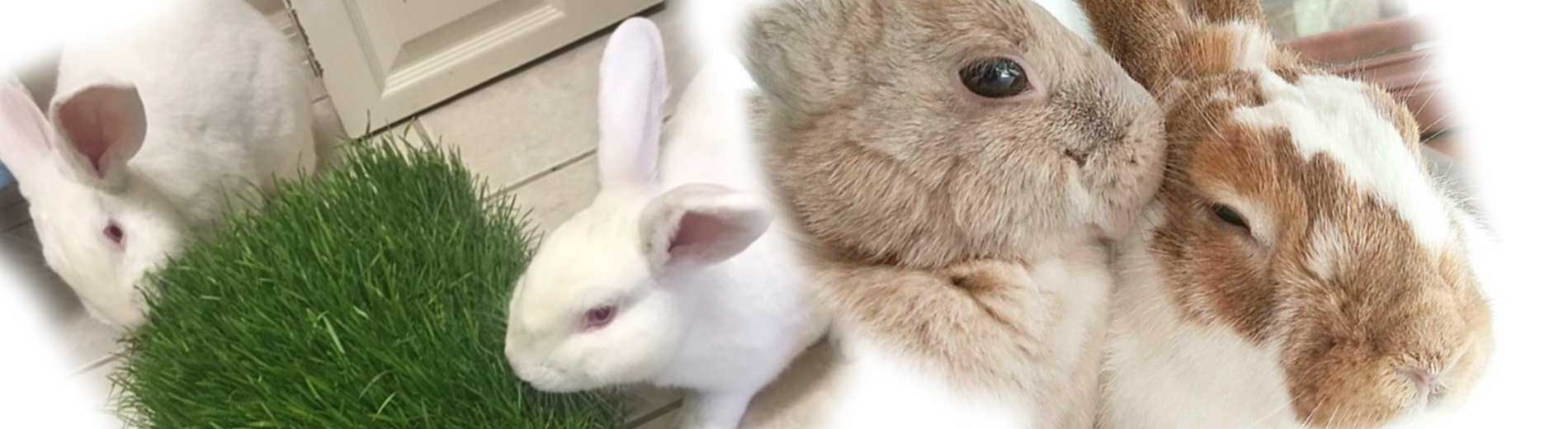 Picture of rabbits