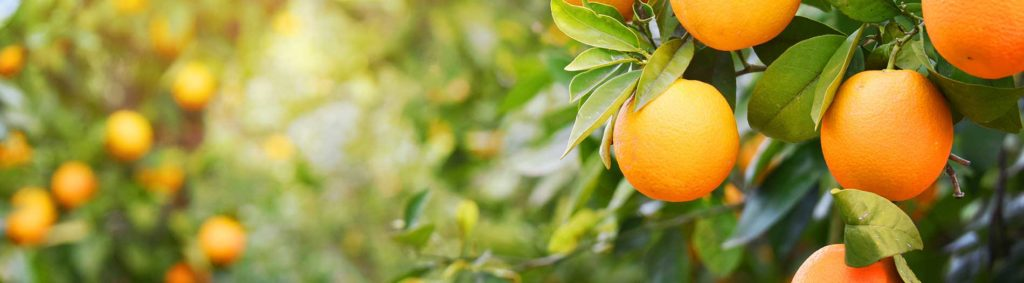 President plants seeds for ag commitment at citrus event