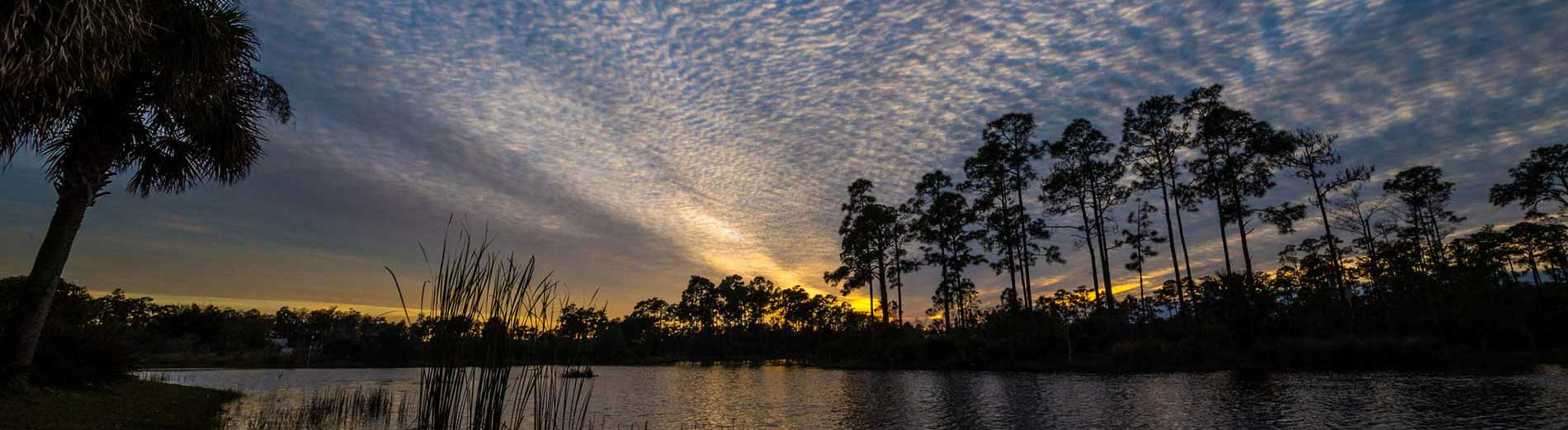Photo shows Florida wetlands