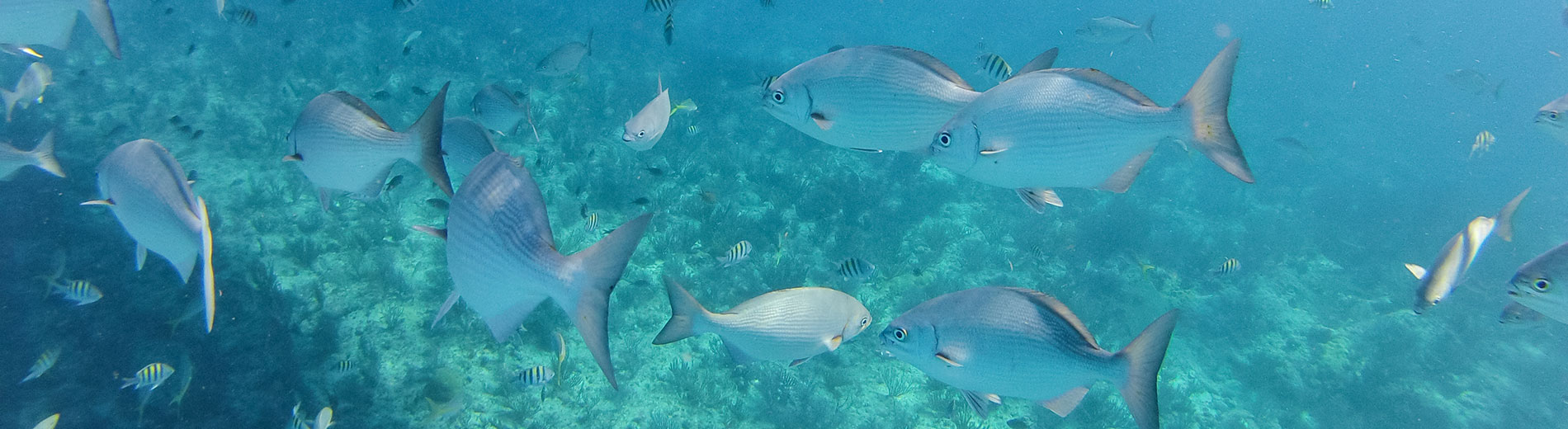 Photo shows fish in water