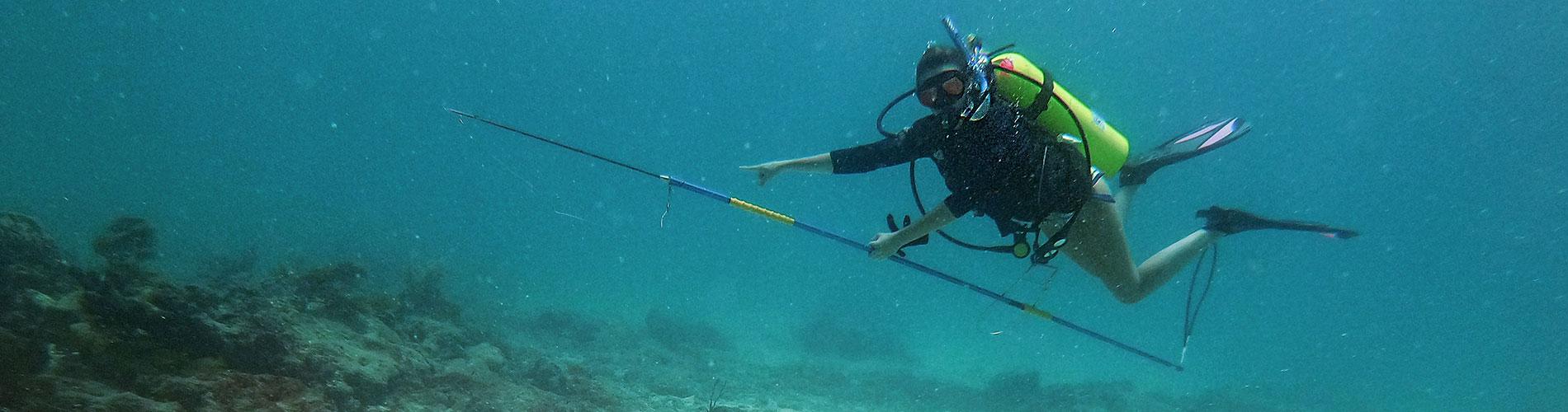 Photo shows FGCU researcher diving