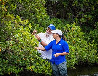 FGCU researchers assessing impact of storms, roads on mangroves