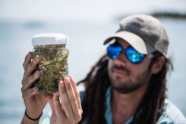 photo shows scientist examining alga sample