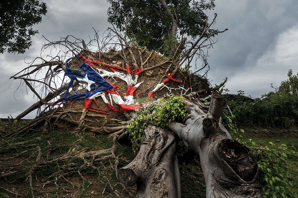 Photo of uprooted tree with Puerto Rican flag painted on trunk.