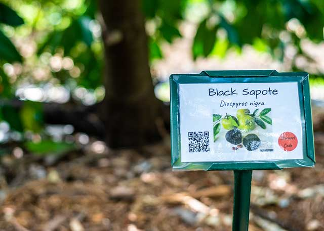 Photo shows a sign in FGCU Food Forest