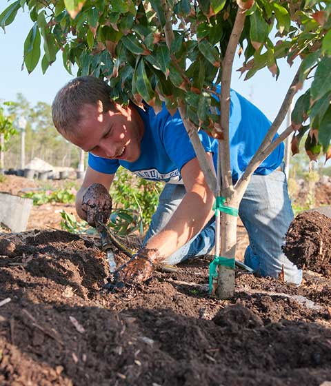 Photo shows FGCU student planting tree