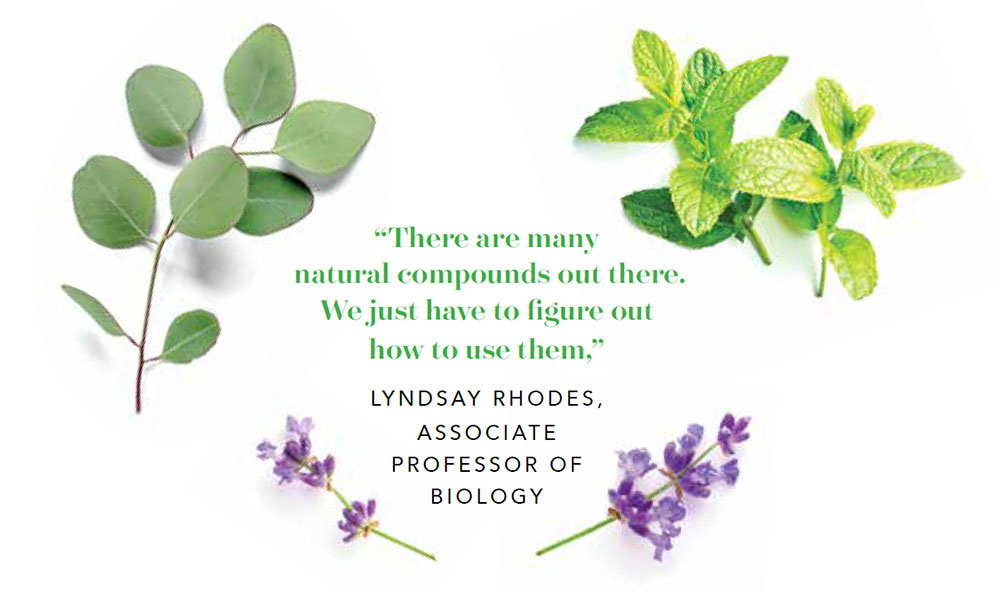 Photo of purple leaves and essential oil related plants.
