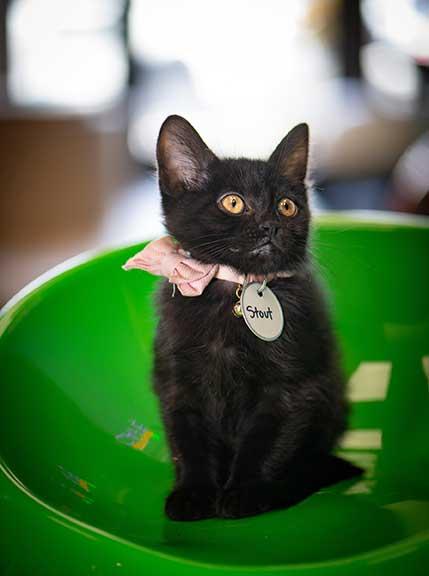 Photo shows kitten