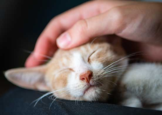 Photo shows cat being petted
