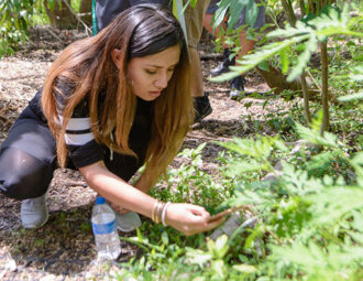 FGCU named top 'green' school in Florida by The Princeton Review