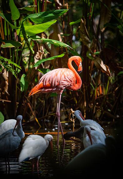 Photo shows birds