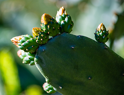photo shows a cactus