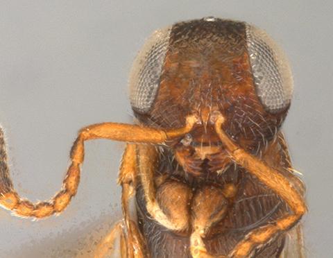 photo shows wasp