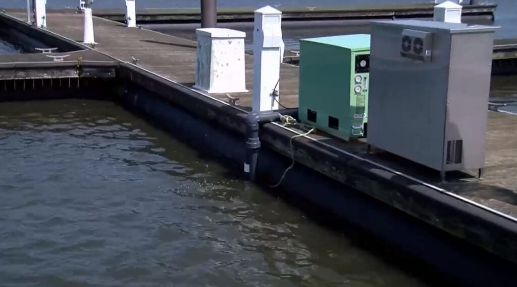 FGCU tests new technology that could clean up algae blooms in canals, marinas